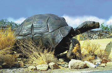 The fossilised bones discovered belonging to the giant tortoise are amongst the most impressive finds; the tortoise is believed to have been about 2.5 metres in length, a size that can be compared to that of a modern car.