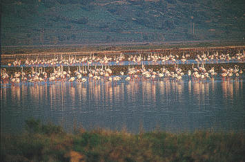 "The Kallonis Gulf region which includes the salt-pits, the region of Messon and the ""Vouvari"" river, comprises one of the most important wetland areas in Greece and habitats to an exceptionally diverse species of rare birds, the most striking being the flamingo."