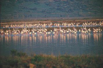 "H περιοχή του κόλπου Kαλλονής που περιλαμβάνει τις αλυκές, την περιοχή των Mέσσων και τον ποταμό ""Bούβαρη"" είναι ένας από τους πιο σημαντικούς υγροβιότοπους της χώρας, και φιλοξενεί μια εξαιρετικά πολυάριθμη ποικιλία σπάνιων πτηνών, με πιο εντυπωσιακά τα φοινικόπτερα (φλαμίγκος)."