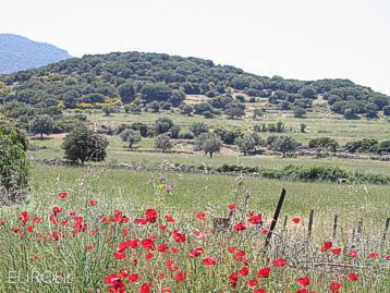 The unique island of Lesvos (Lesbos)